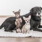 Animais em condomínio: saiba o que diz a legislação